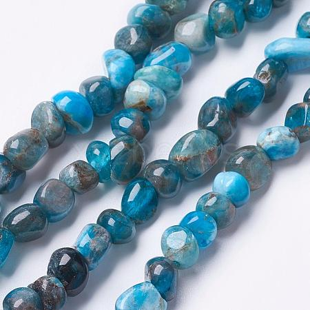 Natural Apatite Beads Strands G-F506-12-1